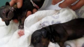 バンビちゃん2010年2月11日元気な赤ちゃんを出産しました。帝王...