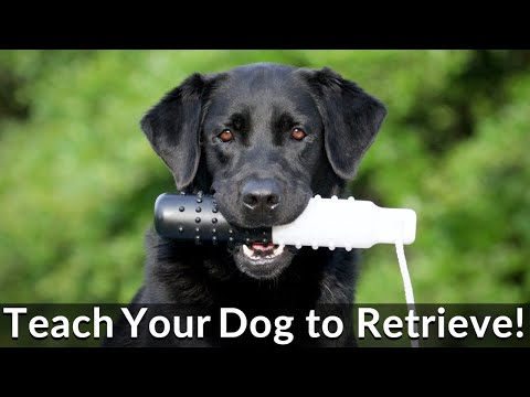 The Essence of Retrieving - Dog Training Fundamentals