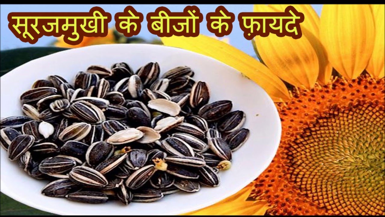 Image result for सूरजमुखी के बीज