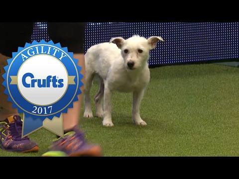 Thumbnail: Agility - Crufts Singles Heat - Small (Agility) | Crufts 2017