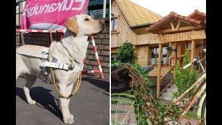 Мальчика с собакой-поводырём нагло выгнали из кафе! Инвалид – не человек?