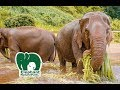 Elephant Nature Park Chiang Mai Thailand - Single Day Visit | Travel Vlog Ep. 27
