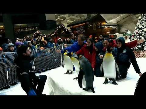 AMAZING PENGUINS & BEST SNOW EXPERIENCE IN SKI DUBAI