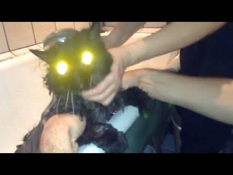 Говорящие коты видео