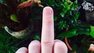 Fingerkrieg