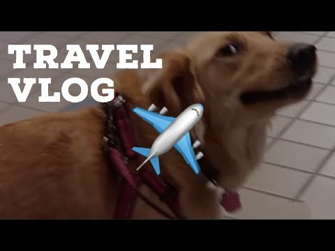 an all over the place travel vlog