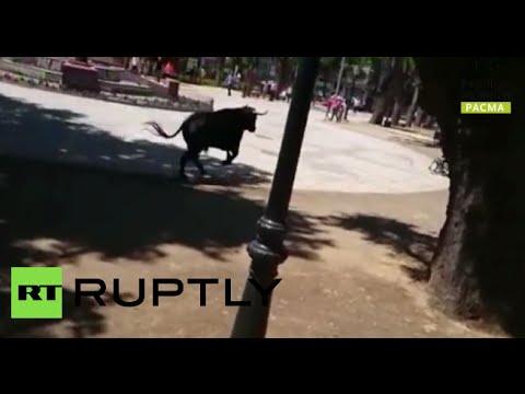 Rampaging bull gores wheelchair user, injures 11 in violent frenzy in Spain