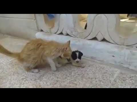 Cat in Aleppo brings puppy to safety