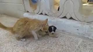 人間に助けられた猫が孤児となった子犬を救おうと奮闘する。内戦が続くシリアで起きているハートウォーミングな助け合いの連鎖