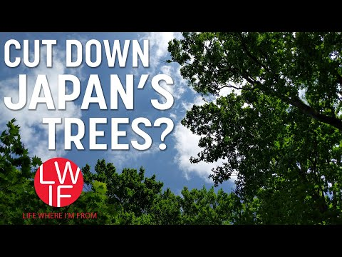 Why Japan Isn't Cutting Down Enough Of Its Trees