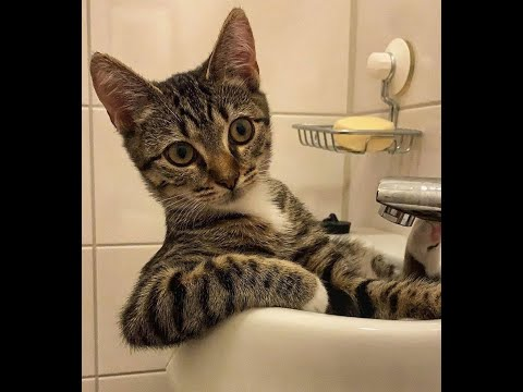 Stunningly funny cats! A selection of jokes with cats and kittens