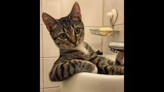 Сногсшибательно смешные кошки! Подборка приколов с котами, кошками и котятами