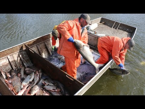 The Fight Against Asian Carp: Commercial Fishing
