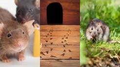 Rodent Control Grand Prairie TX 75050 Pest Control