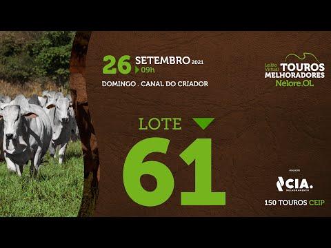 LOTE 61 - LEILÃO VIRTUAL DE TOUROS 2021 NELORE OL - CEIP