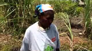 Women's Farmers' Club Kwanza Sul, part 1