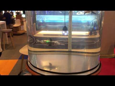 Jessiko the Robot Fish at Viva Technology Paris