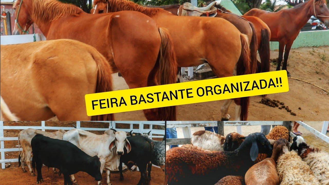 FEIRA DE GADO, CAVALO E BODE EM BEZERROS PE!! (26/09/2020)