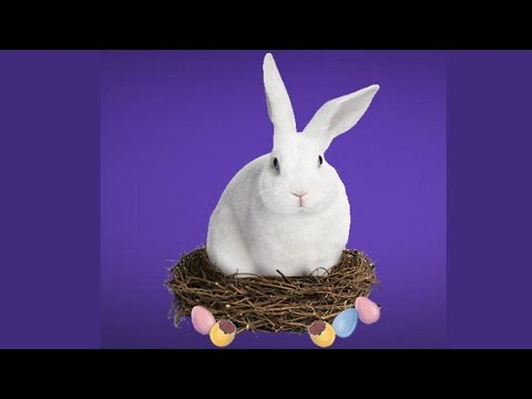 """Cadbury removes word """"Easter"""" from Halal certified """"whatever"""" eggs"""