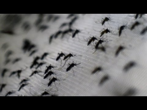 Video image: Zika Virus Spreading in Most of the Americas