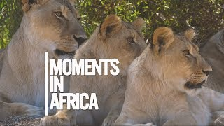 Moments in Africa | Cape Town | DJI Mavic Pro | Panasonic GH4 | DJI Osmo | GoPro 5