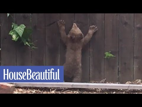 This Mother Bear Tries To Save Her Cub Who Got Stuck In Someone's Backyard | House Beautiful