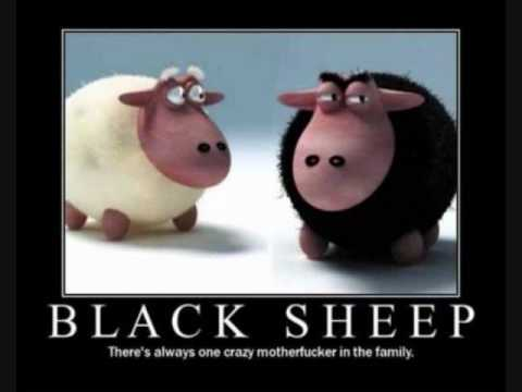 Black Sheep  The Choice Is Yours  This Or That