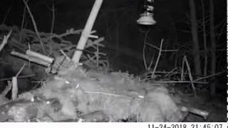 Мышь пытается допрыгнуть до кормушки