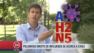 Peligroso brote de influenza se acerca a Chile