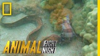 Savage Sea Stalker