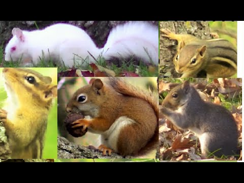 FOR CATS : Ultimate Squirrel Video For Cats To Watch ( YOUR CAT WILL BE PLEASE ) 3 HOURS !