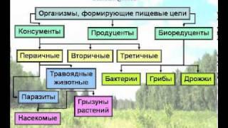 Экология - лекция 1(Данный материал представляет собой первую лекцию и тест из лекционного курса «Экология» рассчитанного..., 2011-04-12T21:48:12.000Z)