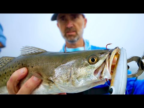 Speckled Trout Therapy On The Rocks