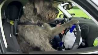 Trained Dog Driving A Real Car In New Zealand