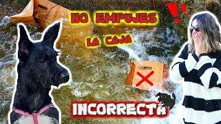 NO empujes LA CAJA INCORRECTA al río /VENGANZA de Lana a su mami