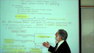 REVIEW OF THE FUNCTIONAL AREAS OF THE BRAIN; Part 2 by Professor Fink