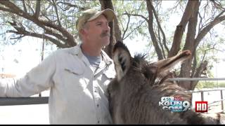 Hoofprints of the Heart makes biggest donkey rescue