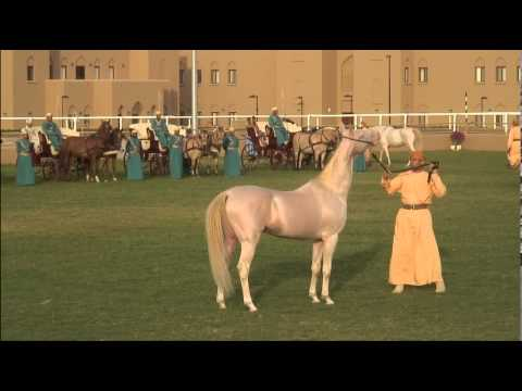 The Omani Royal Cavalry perform to Their Royal Highnesses
