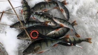 Ловля окуня на мормышку | Рыбалка на Ладоге