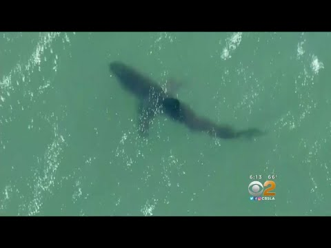 Corona Del Mar Will Test Early-Warning Shark System