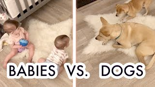 Babies and Dogs - Do They Get Along?! /// McHusbands