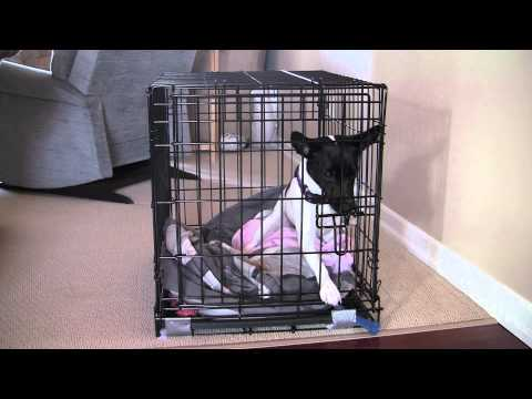 Houdini dog escapes kennel in 7 seconds