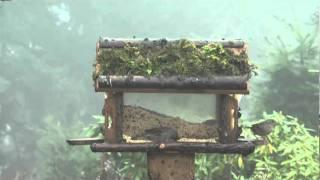 Outdoor Bird Feeder In Action