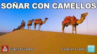 Significado de Soñar con Camellos