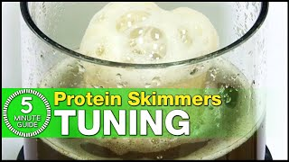 The best way to tune your Protein Skimmer: Learn how in just 5-minutes! thumbnail