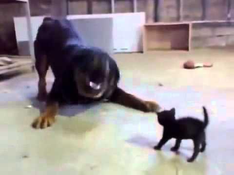 Funny Cat VS Doog