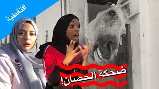 يوم مرعب مع الخيول   حنان فصلت على حصان