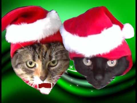 JINGLE CATS -