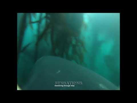Охота большой белой акулы снятая на прикреплённую камеру