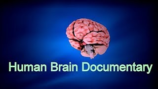 Facts about Human Brain & How Brain Works - Full Documentary